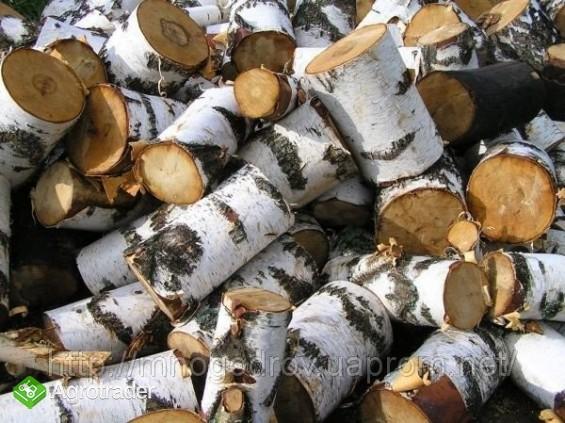 Ukraina.Drewno z Lasow Panstwowych.Cena 15 zl/m3. - zdjęcie 1