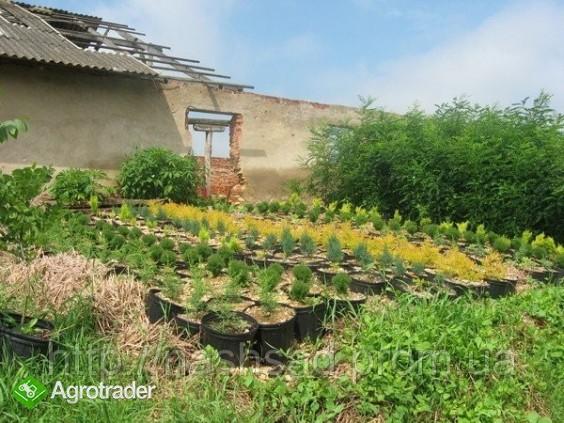 Ukraina.Gospodarstwo rolne, 800ha z zabudowaniami - zdjęcie 5