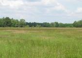 sprzedam łąki 29 ha w pobliżu Zielonej Góry