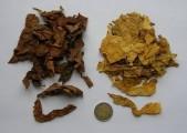 Tytoniowe Liście z Bułgarii