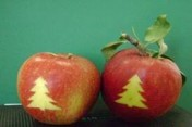 Jabłko odmiany Decosta - Świąteczne Wzorki
