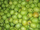 Sprzedam jabłka odmiany Golden D.(65-70)