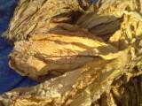 tytoń liście jasny i ciemny od 18 zł/kg 782264348
