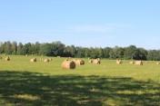 Do dzierżawy gospodarstwo rolne