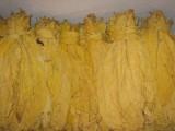 Tytoń liscie Virginia Burley po fermentacji 2014