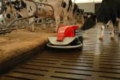 Samojezdny robot do czyszczenia podłogi rusztowej Lely Discovery