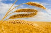 Studia podyplomowe na kwalifikacje rolnicze