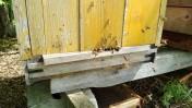 sprzedam rodziny pszczele 10cio ramkowe