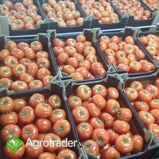 Pomidory szklarniowe