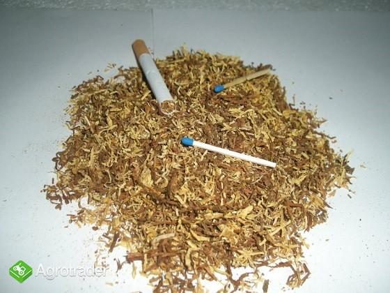 tytoń gotowy do palenia 65 zł