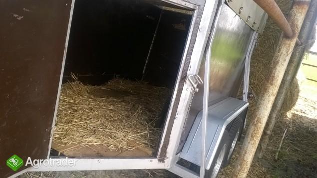 przyczpa dla koni bdla swin - zdjęcie 1