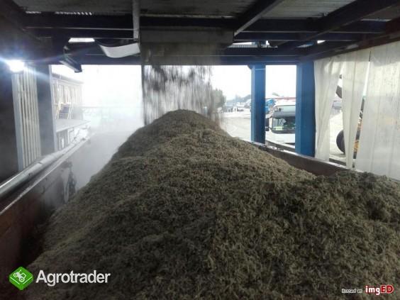 Świeże Wysłodki buraczane mokre, cukrownia Krasnystaw kampania 2020