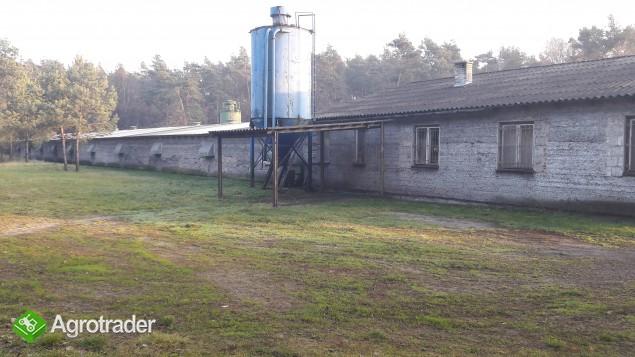 Hala produkcyjna ferma kurnik - zdjęcie 5
