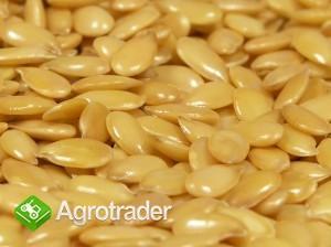 Ukraina. Len mielony, maka z nasion, ekstrahowany olej, siemie 1 zl/kg