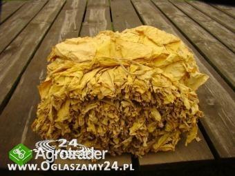 sprzedam liście tytoniu Virginia gold Burley