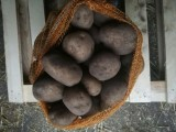 Sprzedam ziemniaki jadalne: marabella, anuszka, vineta