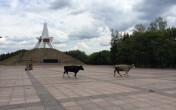 Ukraina. Siano lakowe 70 zl/tona, orzechy wloskie luskane,pestki dyni