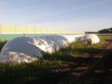 Kukurydza w rekawie (śrutowana) - sprzedam