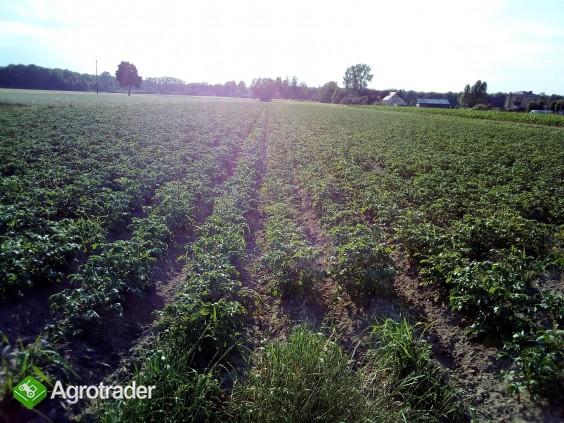 Sprzedam gospodarstwo rolne 08-300 Sokolow Podlaski, woj. Mazowieckie - zdjęcie 1
