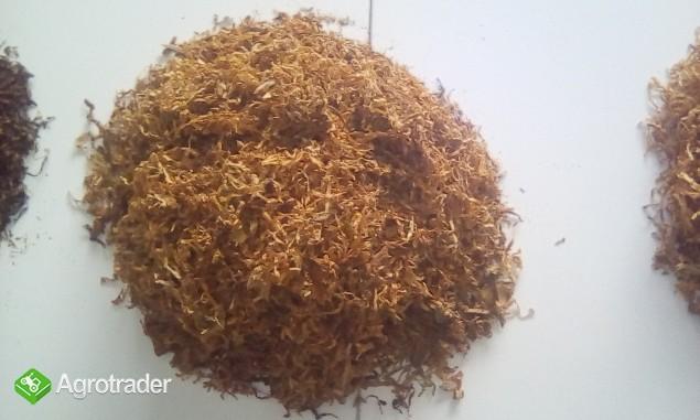 Tytoń super jakości tylko 65zł za 1kg!!!