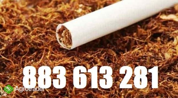 70zł Tani tyton Korsarz, tyton Marlboro, tyton Camel