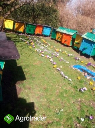 Pszczoły przezimowane już po pierwszych oblotach