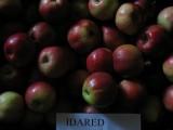 sprzedaż jabłek, jabłka