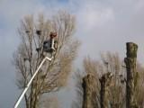 Wycinanie, formowanie drzew i krzewów