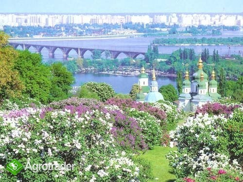 Ukraina,Kijow.Nieruchomosci atrakcyjne  - zdjęcie 4