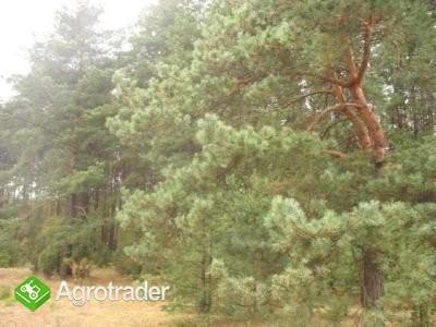 działka leśna 4000m2 - zdjęcie 2