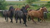 sprzedam konie- różne
