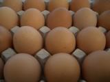 Jaja z chowu ściółkowego